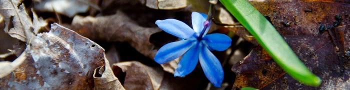 blue-flower.jpg - 36.15 kB